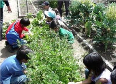 agricultura_urbana_2.jpg
