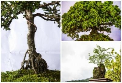 bonsai-jardi-n-bota-nico.jpg