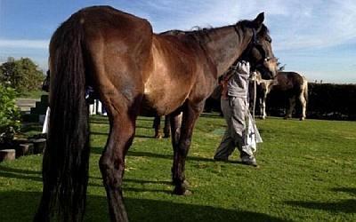 caballos_seran_alimentados_por_SDA.jpg