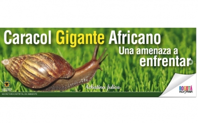 caracol_africano.jpg
