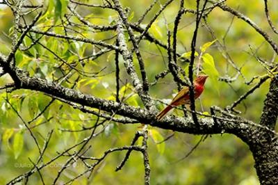 dia_aves_migratorias.jpg