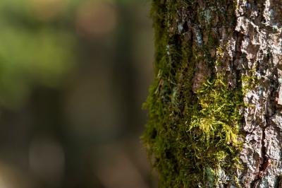 nota-plantacion-de-590-arboles-en-bogota-16-03-2018..jpg