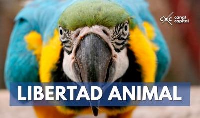 nota-trafico-de-especies-21-02-2018..jpg
