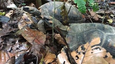 noticia-animales-rescatados-en-bogota-11-07-2017..jpg