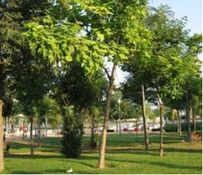 noticia-arboles-jardin-botanico.-jpg..jpg