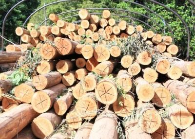noticia-incautacion-de-madera..jpg