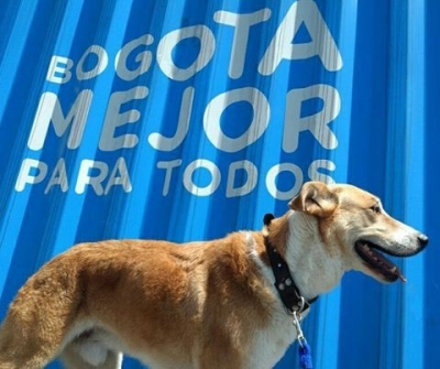 noticia-instituto-de-protecion-animal..jpg