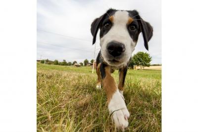 noticia-jornada-de-adopcion-de-mascotas-09-08-2017..jpg