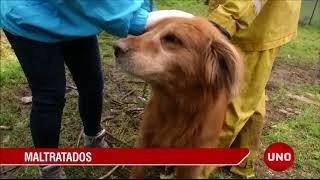 noticia-recuperacion-de-60-perros.-04-09-2017..jpg