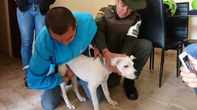noticia-rescate-animal-sda..jpg