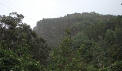 noticia-restauracion-de-cerros-orientales-de-bogota.-28-06-2017..jpg