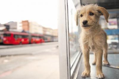 noticia-sellamiento-de-venta-de-mascotas.-24-10-2017..jpg