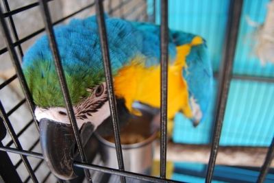 parrot-276927_640.jpg