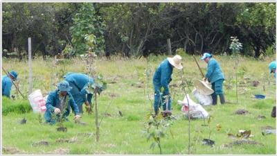 plantacion_jbb.jpg