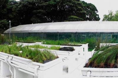 plantas-acuaticas.jpg