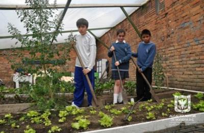 proyectos-ambientales-escolares.jpg