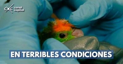recuperacion-de-aves-07-12-2018..jpg