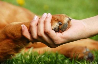 sensibilizando_sobre_responsabilidad_tenencia_mascotas_bosa.jpg