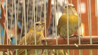 nota-aves-silvestres-29-04-2.019.jpg