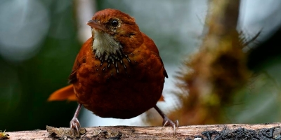 nota-dia-internacional-de-las-aves-10-05-2.019.jpg