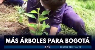 nota-plantacion-de-arboles-en-bogota-04-06-2.019.jpg
