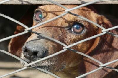 nota-prohibicion-de-venta-de-animales-26-12-2018..jpg