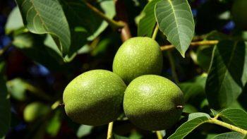Cinco Nuevas Especies de árboles Sembrados por la Alcaldía.
