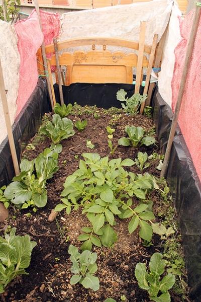 agricultura_urbana_1.jpg