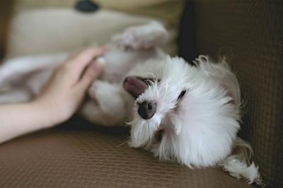 dia-proteccion-perros.jpg