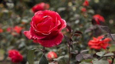 nota-jardin-botanico-17-09-2018..jpg