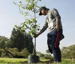 nota-plantacion-de-arboles-05-09-2018..jpg