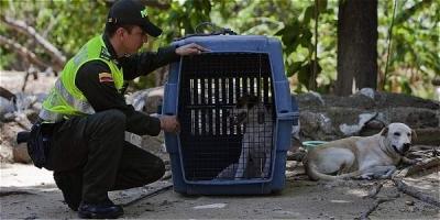 noticia-policia-ambiental-de-bogota-18-07-2017..jpg