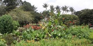 Nota, Jardín Botánico, 19 - 07 - 2.019
