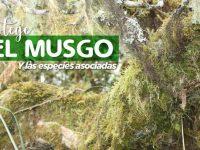 Uso de Musgo en Diciembre.
