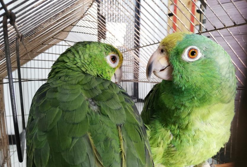 Liberación Masiva de Animales Silvestres.