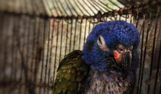 Rescate de Aves Silvestres en Bogotá.