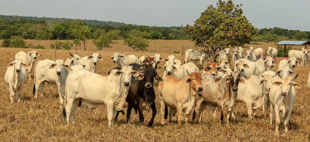 Foto Min Agricultura
